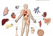 اهدای اعضای بدن