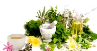 تقسیم بندی گیاهان دارویی