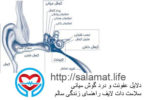 دلایل عفونت و درد گوش میانی