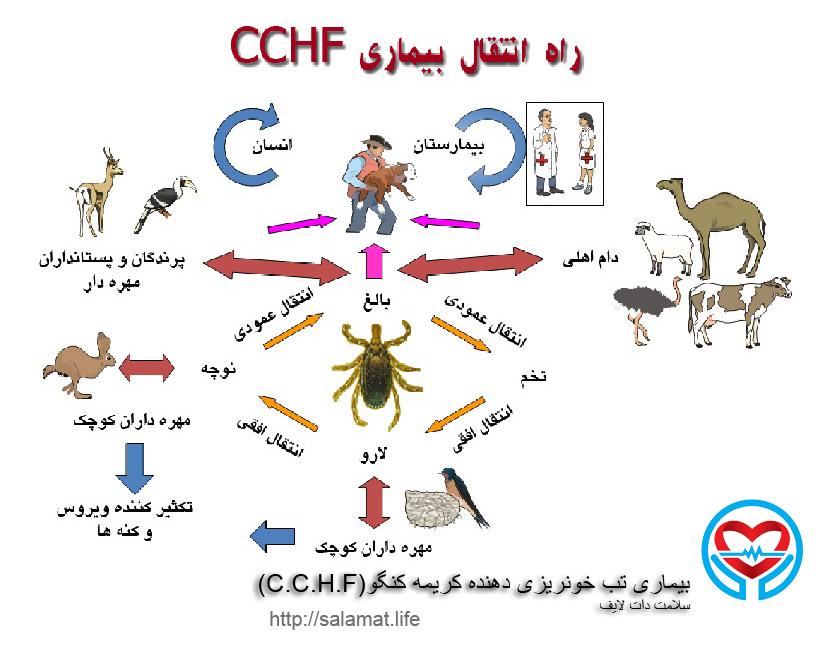 بیماری تب خونریزی دهنده کریمه کنگو(C.C.H.F)
