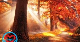 زیبایی شناسی در طبیعت یعنی چه؟