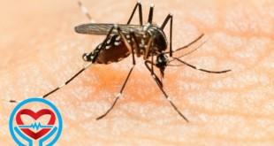 ویروس زیکا | سلامت دات لایف راهنمای زندگی سالم