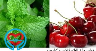 گیلاس و گیاه پونه | سلامت دات لایف راهنمای زندگی سالم