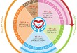 چرخه قاعدگی از قاعدگی تا بارداری