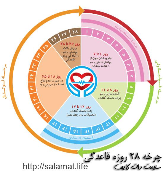 چرخه 28 روزه قاعدگی