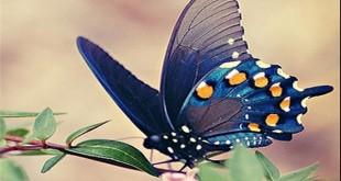 بیماری پروانه Epidermolysis Bullosa