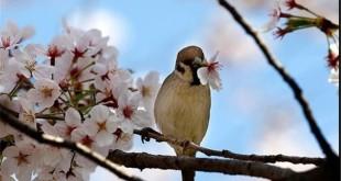 مزاج شناسی فصل بهار