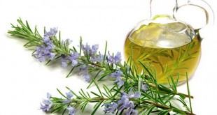 rosemary-oil-for-baldness روغن رزماری