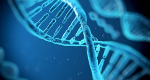 پروژه ژنوم مصنوعی انسان