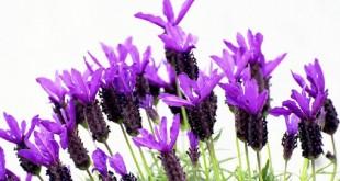 گیاهانی که حشرات موذی را فراری می دهند