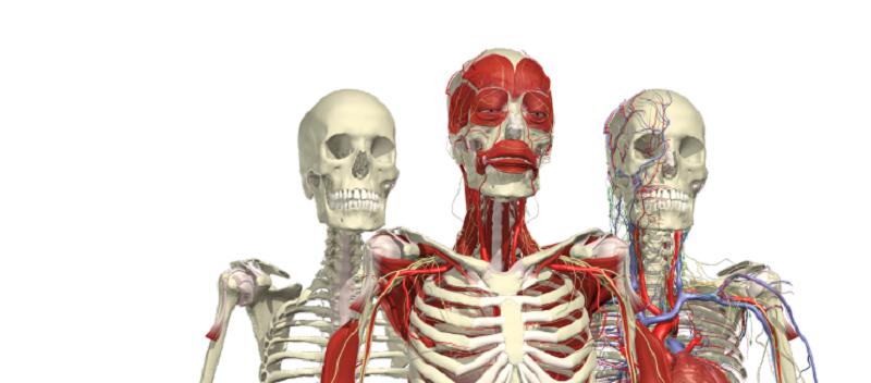 اعضای عجیب و غریب بدن