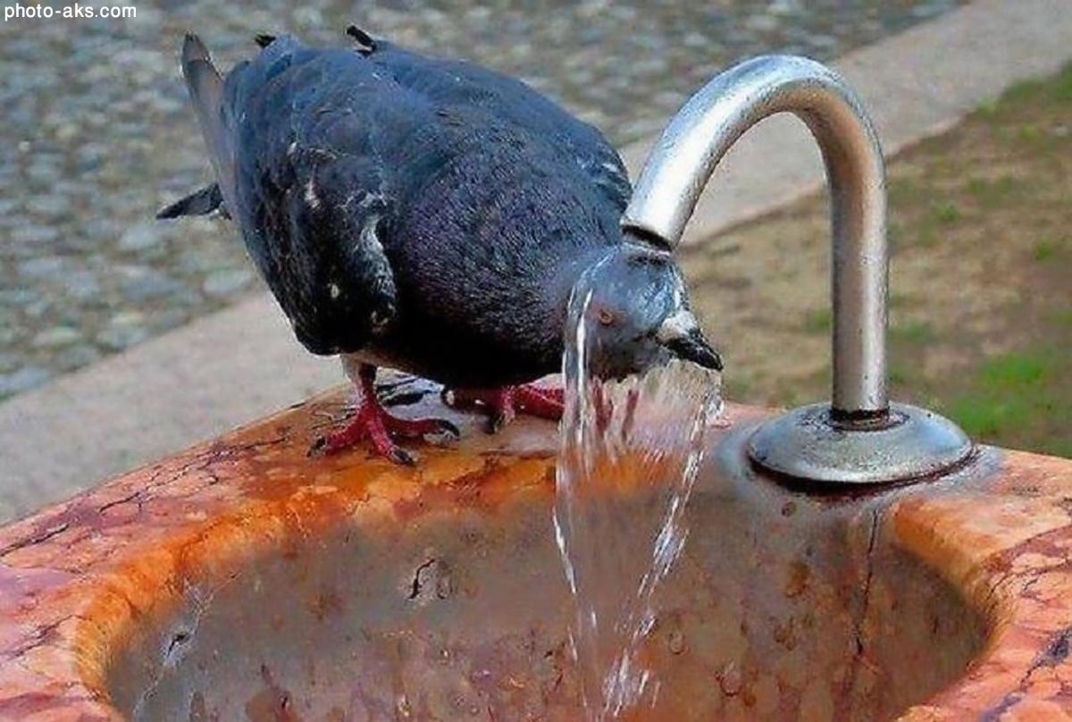 حمام کبوتر