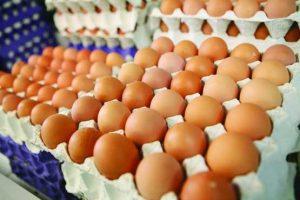 تخم مرغ رسمی سرشار از پروتئین