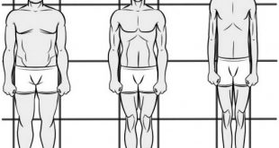 انواع تیپ های بدنی