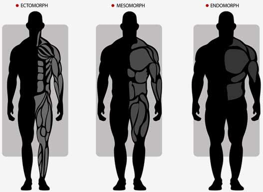 A variety of body types