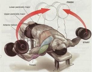 برنامـه بدنسازی به منظور پسر 15 ساله تمرین بـه منظور عضلات  درون خانـه و   باشگاه بدنسازی   آموزش ... mimplus.ir