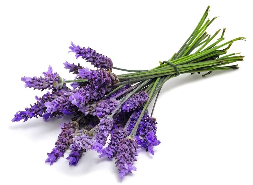 خواص اسطوخودوس در طب سنتی